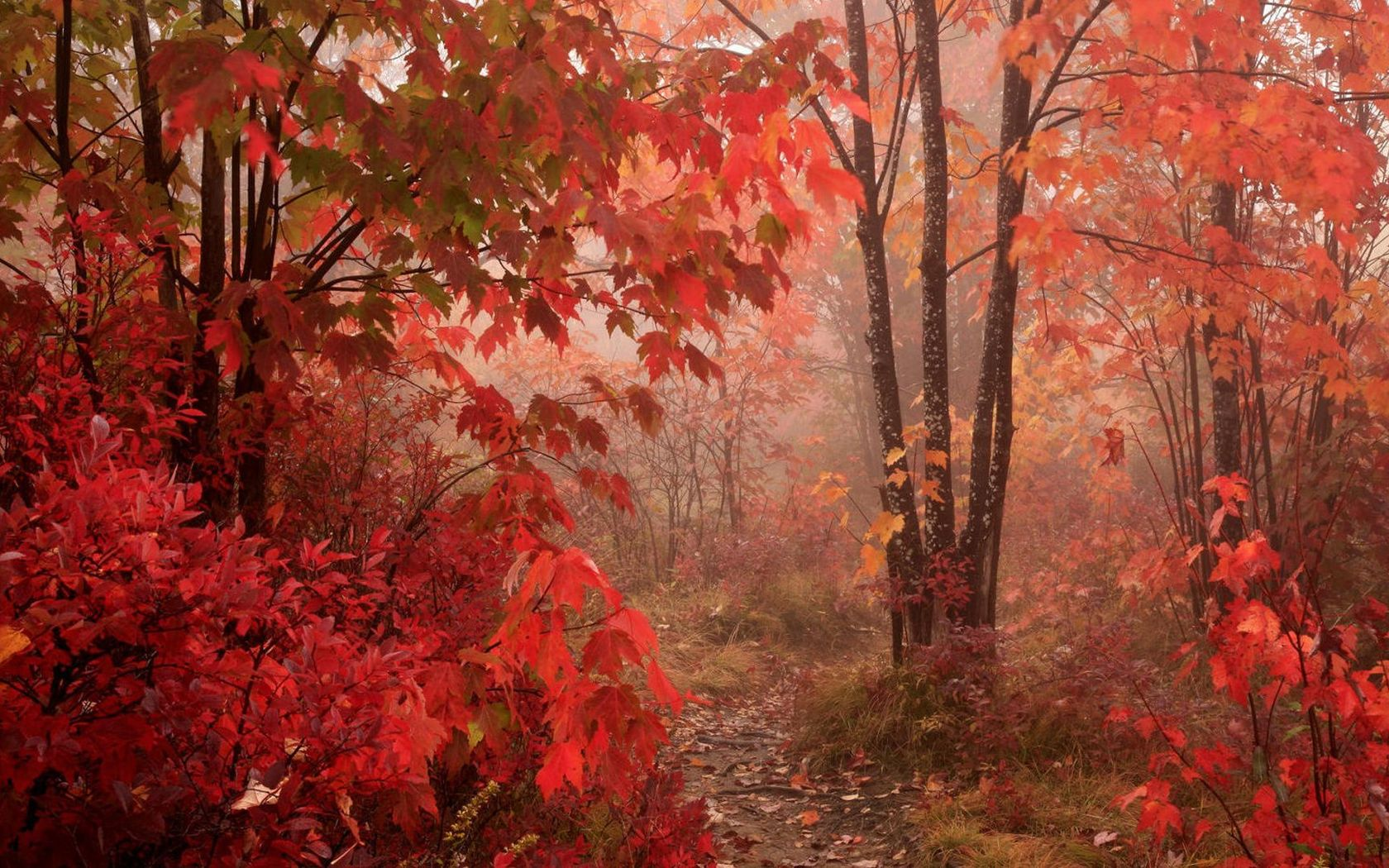 Pixel Forest Wallpaper Cute 8 Red Autumn Forest Wallpaper 41017 868 Autumn Red