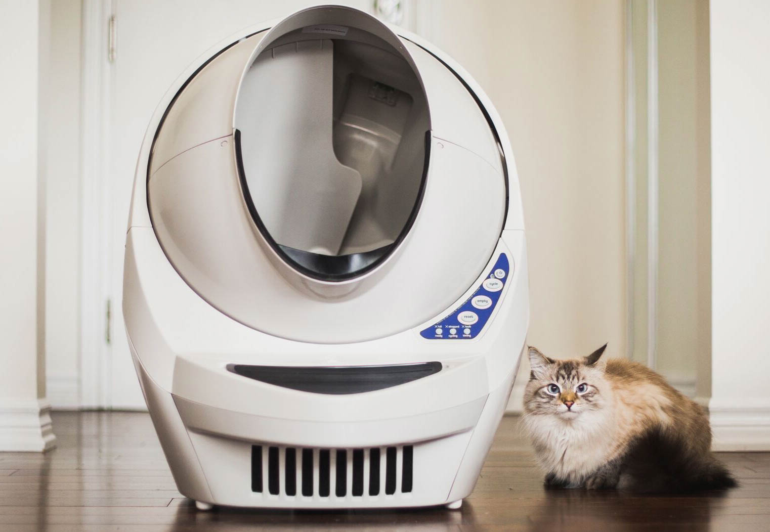 6 Smart Home Gadgets That Help Your Cat Live In Luxury
