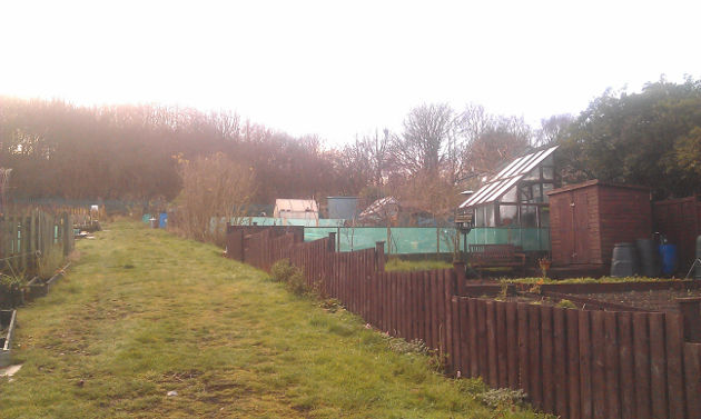 allotment_december_thawed