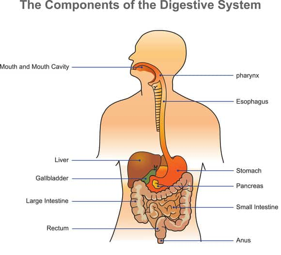 Fecal Impaction How To Come Unstuck From An Impacted Bowel Care2