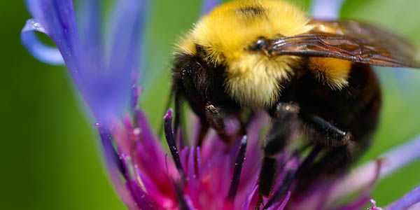 Stop Spraying toxic pesticides! Decrease cancer and asthma rates and save the pollinators!!