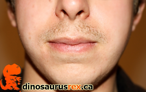 Karl-dinosaurus-rex-day-11-week-2-movemeber-2012-moustache-mustache
