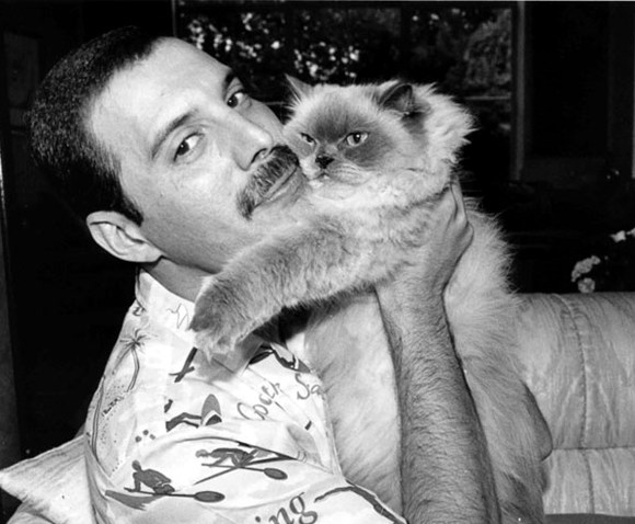 freddie-mercury-best-mustache-with-cat