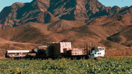 This Dec. 17, 1997, file photo, lettuce is harvested at a farm in Wellton, Ariz., east of Yuma. (AP)