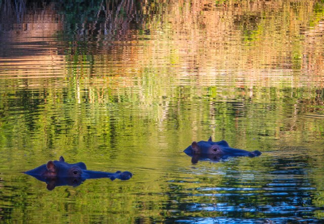 Rukiya Camp Hippos