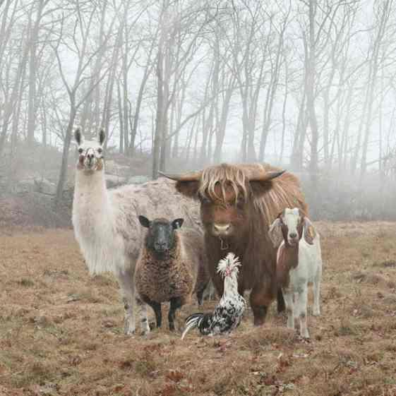 Beautiful Animals Looking at Camera