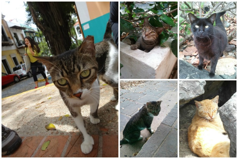Cats of Old San Juan Collage