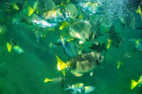 Such an amazing feeling to swim with these fish