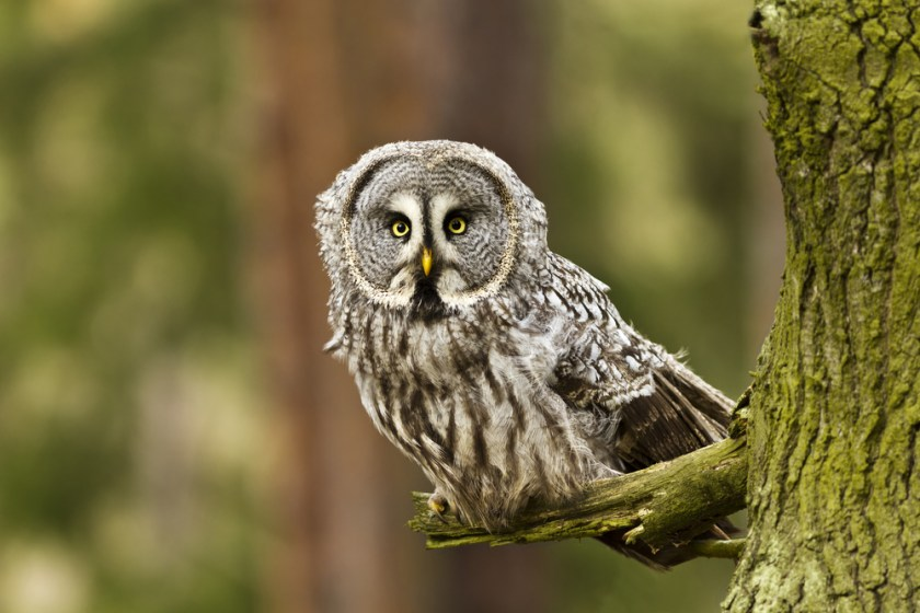owl - animals with unique eyes