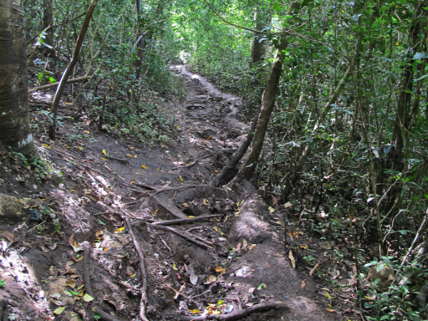 Sempu island path