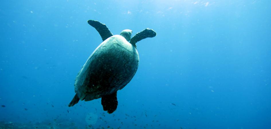 best dive spot in gili trawangan