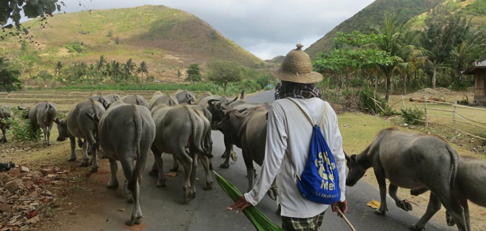 traffic in Indonesia
