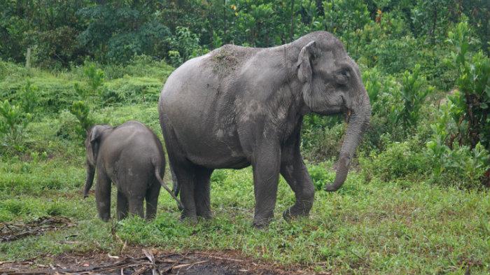 Tino and Ria elephants