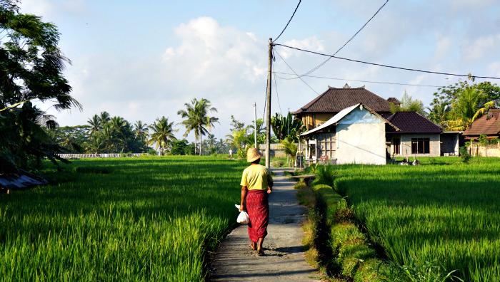 rice fields trekking with wapa di ume