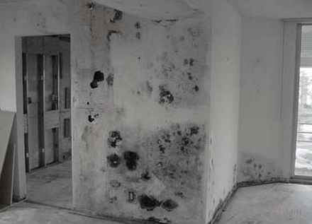 Black Mold - Pictures, Symptoms, Removal, Health Effects, Risks