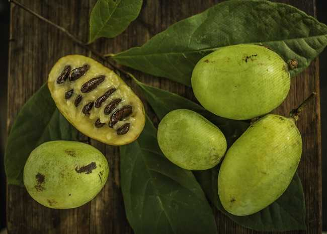 What Is Pawpaw Here Are 6 Fascinating Facts About This