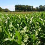 Argentina en busca de la soberanía alimentaria