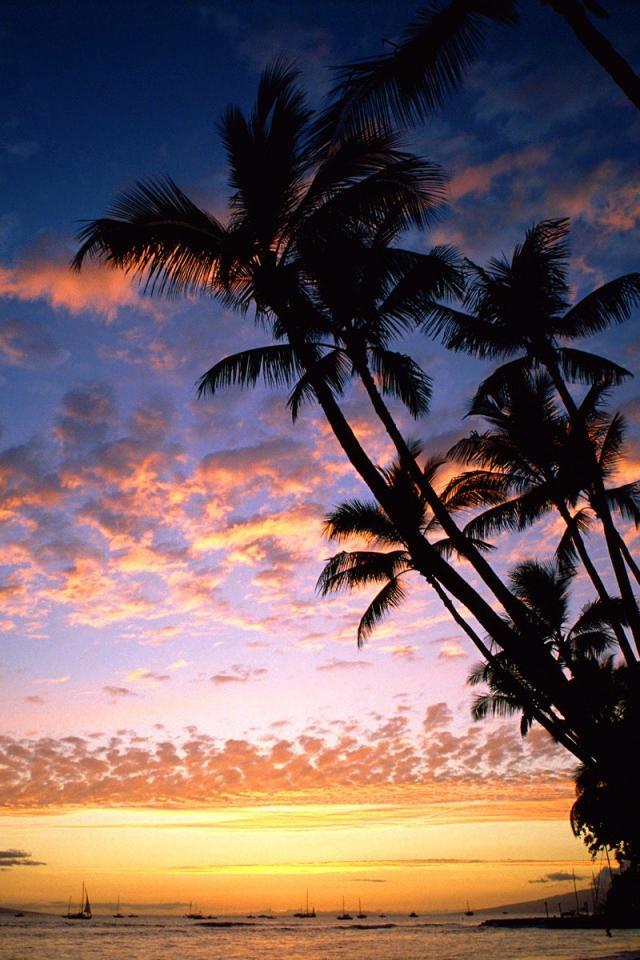 Palm Tree Iphone Wallpaper ハワイアン Iphone壁紙ギャラリー