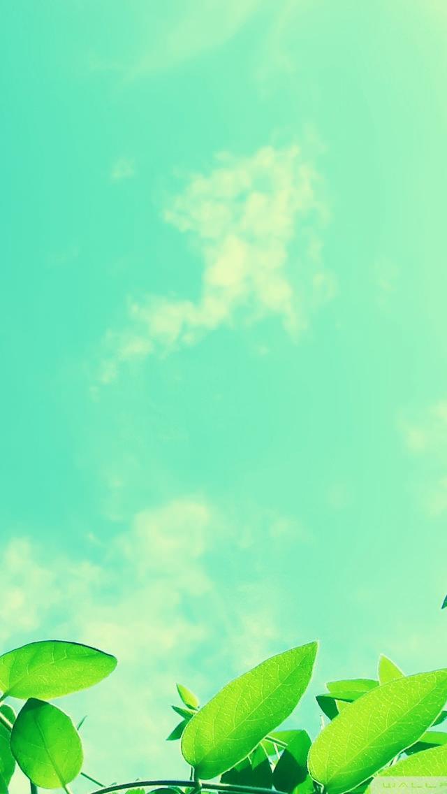 Wallpaper App For Iphone X 新緑と青空 Iphone壁紙 スマホ壁紙 7th Wallpaper スマホ壁紙 Iphone待受画像ギャラリー