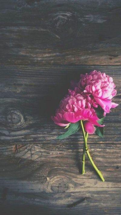 花   おしゃれなスマホ壁紙   スマホ壁紙/iPhone待受画像ギャラリー