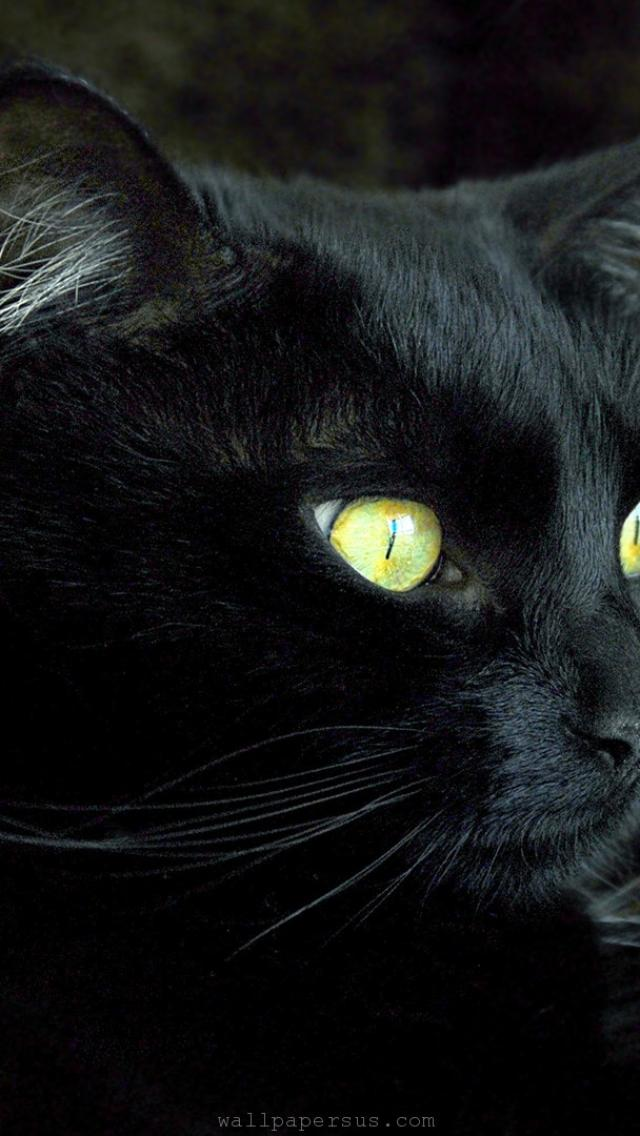 Kitty Wallpaper Iphone 【640x1136】猫【iphone5用高画質壁紙】 【iphone5】猫の可愛らしい待ち受け壁紙画像