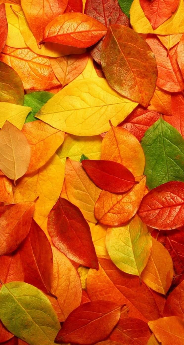 Free Early Fall Wallpaper 【スマホ壁紙】敷き詰められた紅葉の落ち葉🍂 Iphone5s壁紙 待受画像ギャラリー
