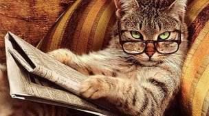 Gato lendo jornal com óculos no sofá