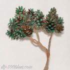 Bonsai tree with pine cones