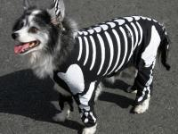 Halloween Costume Ideas for Dogs and Cats