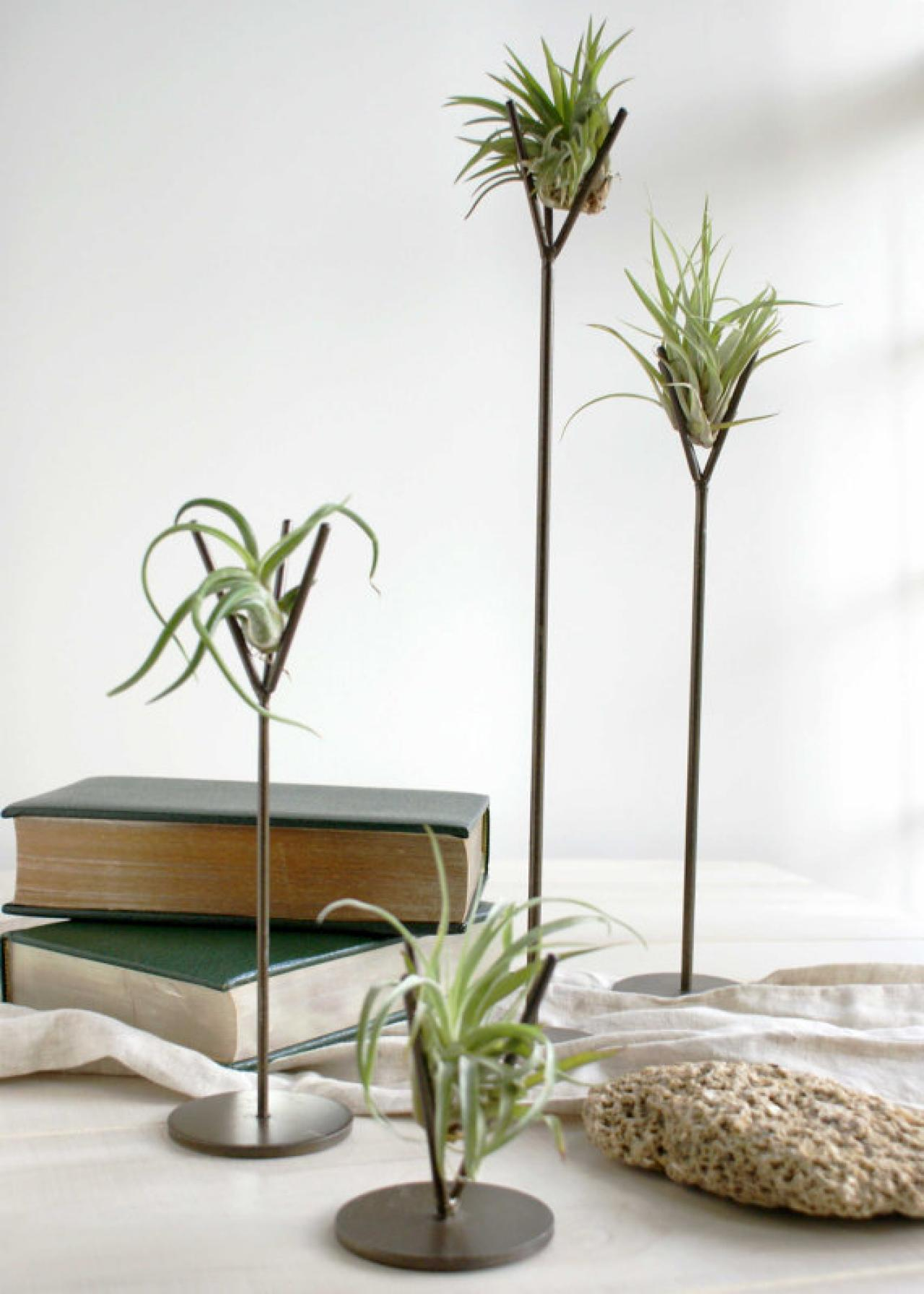 Diy Terrarium Stand Creative Genius The Zen Succulent Diy Network Blog