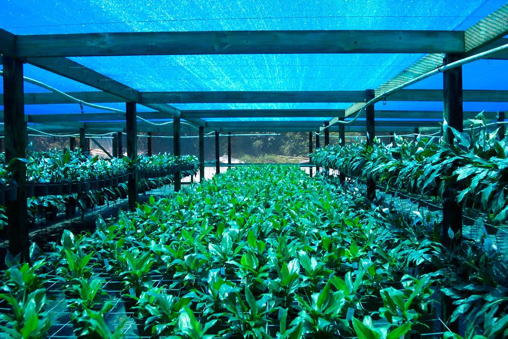 Greenhouse Shade Net In Fiji Diyatha Garden Center