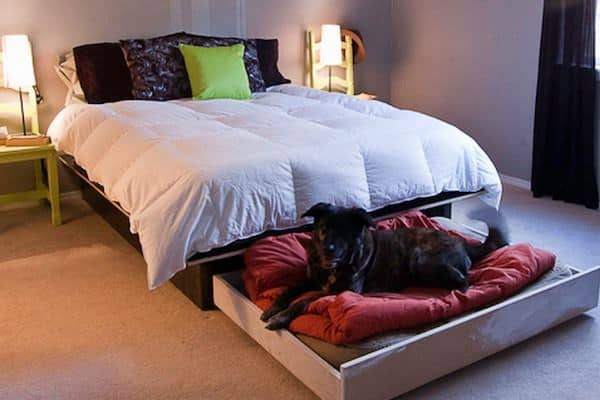 Diy Platform Bed With A Roll Out Dog Bed