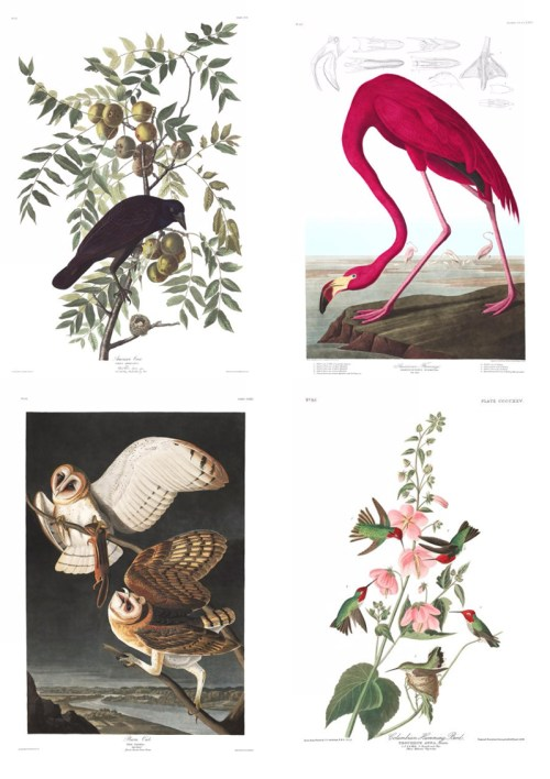 Free Art Resources: John J. Audobon's Birds of America