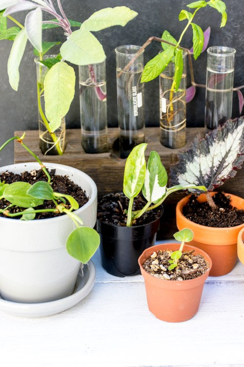 Want your own indoor jungle? Then check out this guide to the easiest plants to propagate.