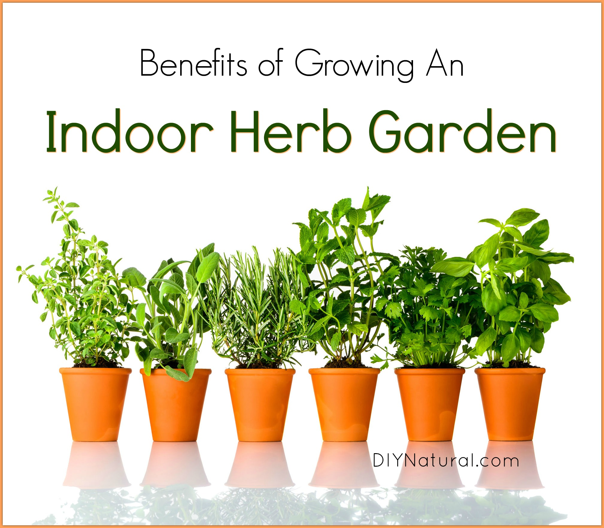 Herbs Pots Indoors Indoor Herb Garden 5 Reasons You Should Be Growing Herbs