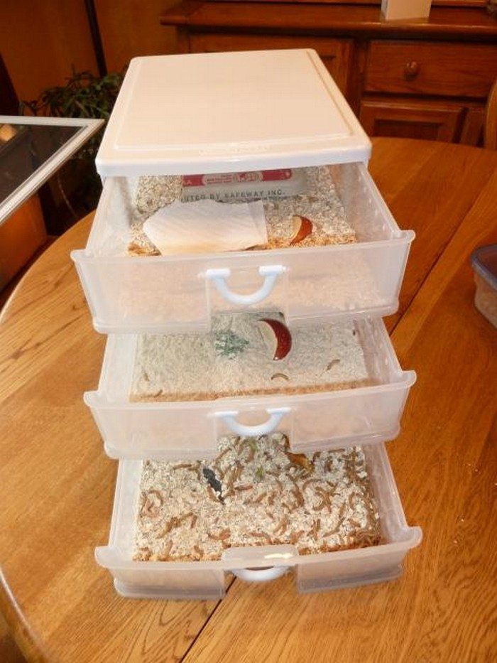 Toilet Paper Dispenser For Kids How To Raise Mealworms For Your Chooks | Diy Projects For