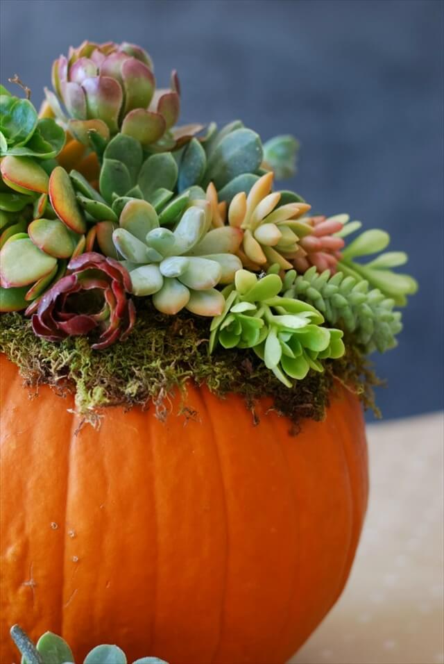 Diy Baby 13 Diy Thanksgiving Centerpiece | Diy To Make