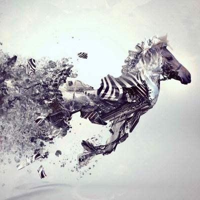 Cool Zebra iPad Wallpaper! – thePADblog