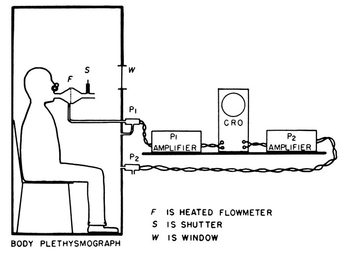 figure 3 body diagram