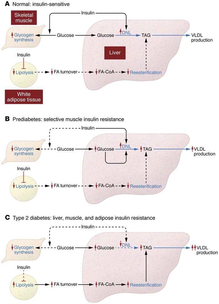 JCI - The pathogenesis of insulin resistance integrating signaling