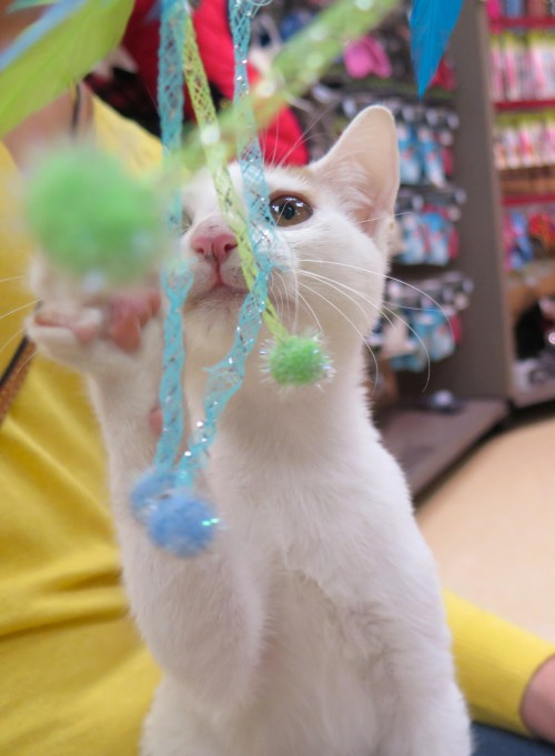 Medium Of Miralax For Cats