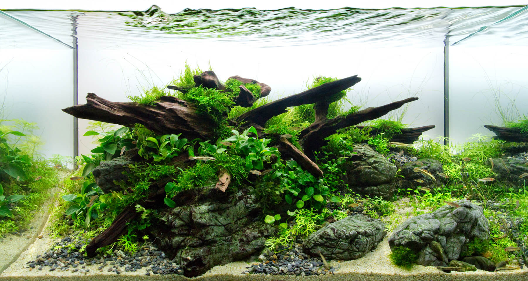 Aquascape Design Aquascaping Full Greater Des Moines Botanical Garden