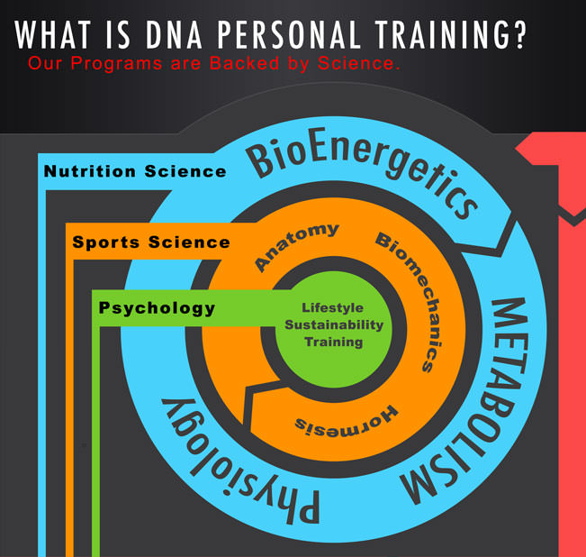 What is DNA Personal Training? Our Programs are backed by science and begin with a Nutrition Science foundation. This incorporates the use and knowledge of bioenergetics, metabolism, and physiology. We then use sports science to provide stimulus using anatomy, biomechanics and hormetic effect of exercise. Our training programs also incorporate an element of psychology to keep clients actively involved.