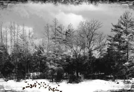 Birch Tree Fall Wallpaper Winter Black And White Winter Amp Nature Background