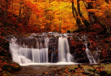 New England Fall Themed Wallpaper Autumn Forest Forests Amp Nature Background Wallpapers On