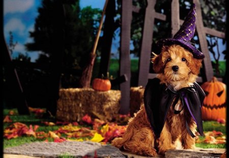 Fall Pumpkin Background Wallpaper Halloween Pups Dogs Amp Animals Background Wallpapers On