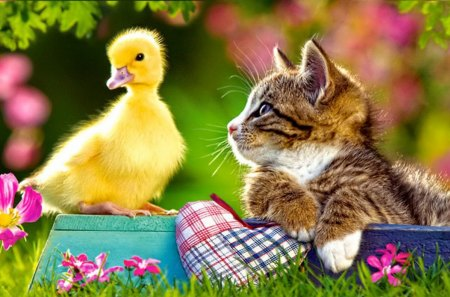 Cute Little Kitten Desktop Wallpapers Two Friends Other Amp Animals Background Wallpapers On