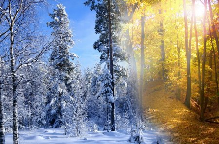 Free Christmas Falling Snow Wallpaper Fall Winter Collide Collages Amp Abstract Background