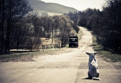 When Will You Come Back Home? - Dogs & Animals Background Wallpapers on Desktop Nexus (Image ...