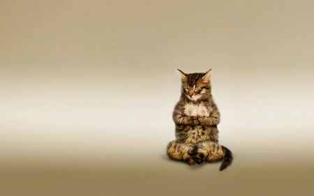 Cute Kitty Cat Wallpapers Meditating Kitty Cats Amp Animals Background Wallpapers On